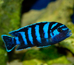 Каталог рыб