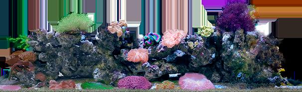 Обслуживание маленького морского аквариума